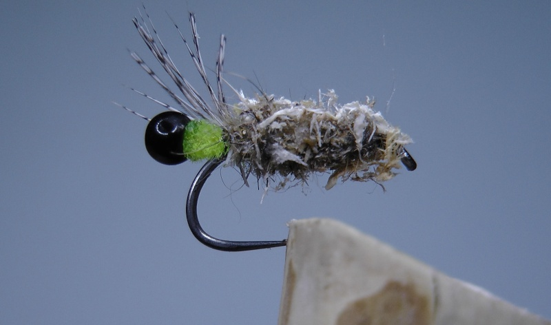 larve de trichopsedge Casset10