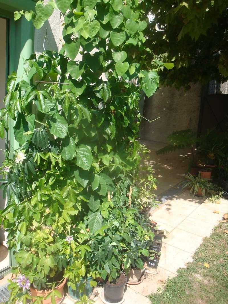 Bonjour, présentation de toutes mes plantes - Page 2 Dsc08710