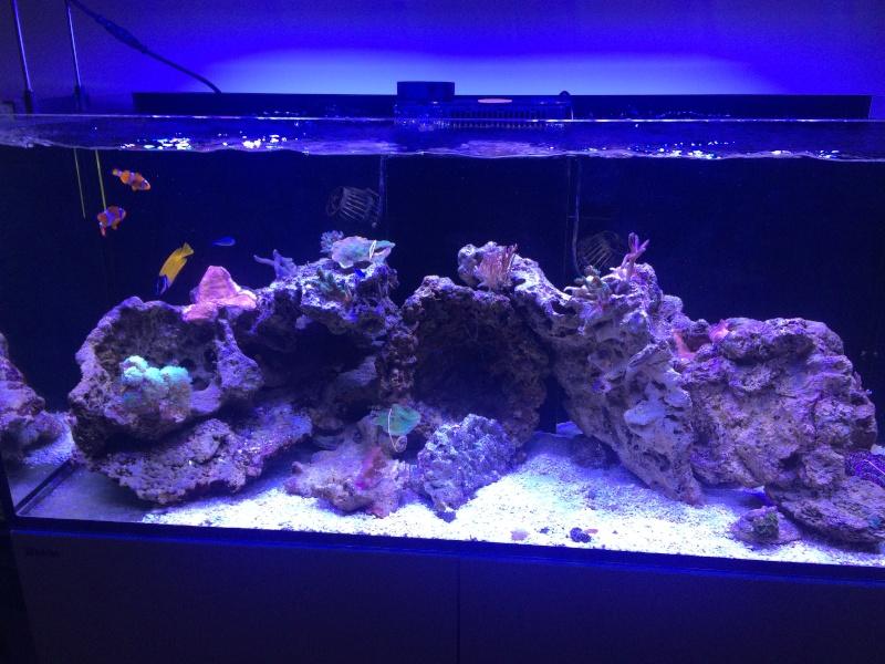 RedSea Reefer 350 Blanc - Page 2 Img_6711