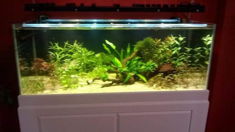 Aquarium 300l communautaire Img_0110