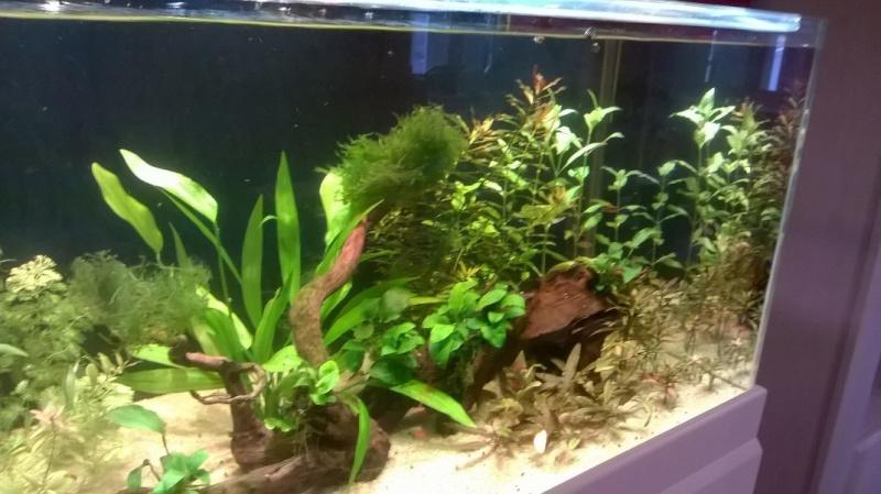 Aquarium 300l communautaire Img_0113