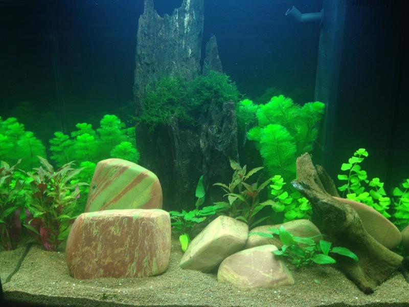 Mes aquariums  Img_0110