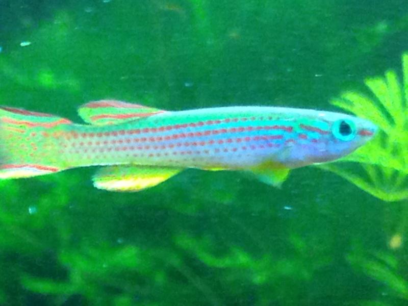 Mes aquariums  Img_0410