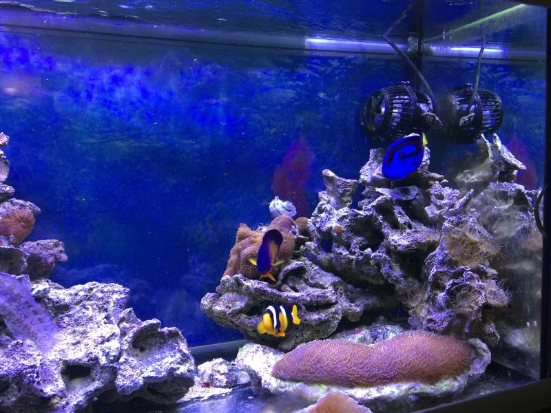 problém aquarium récifal 250l méthode berlinoises.  - Page 5 Img_2412