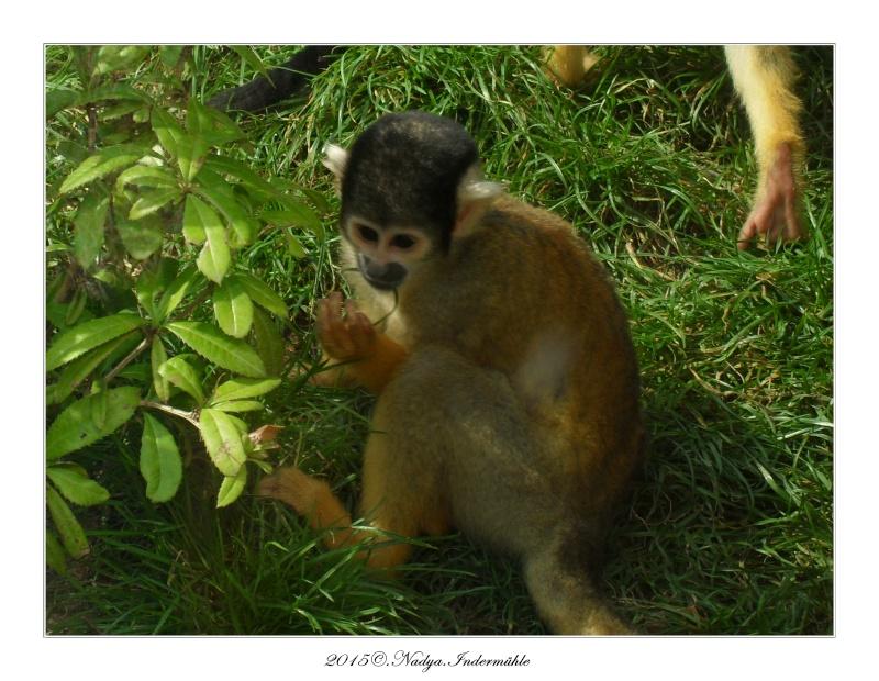 Amnéville, et son zoo Cadre355