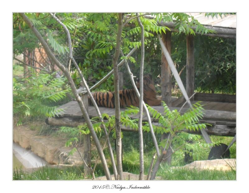 Amnéville, et son zoo Cadre356
