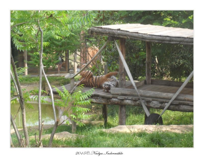 Amnéville, et son zoo Cadre357