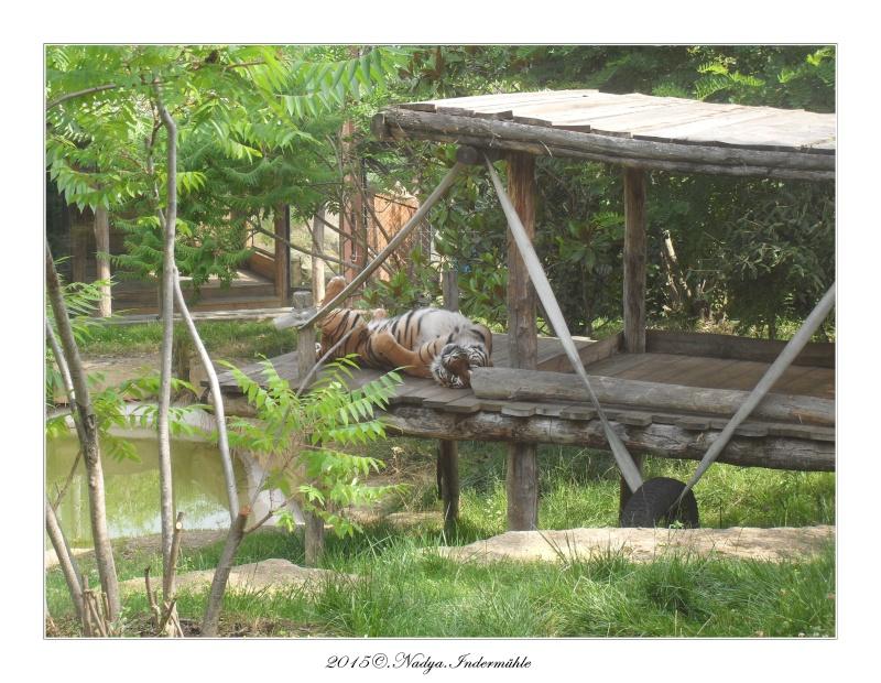 Amnéville, et son zoo Cadre358