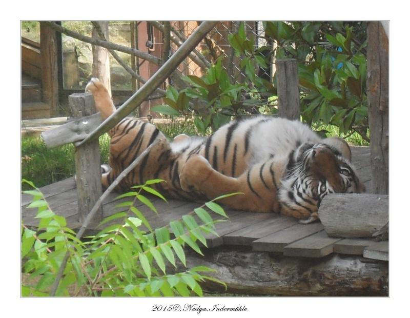 Amnéville, et son zoo Cadre359