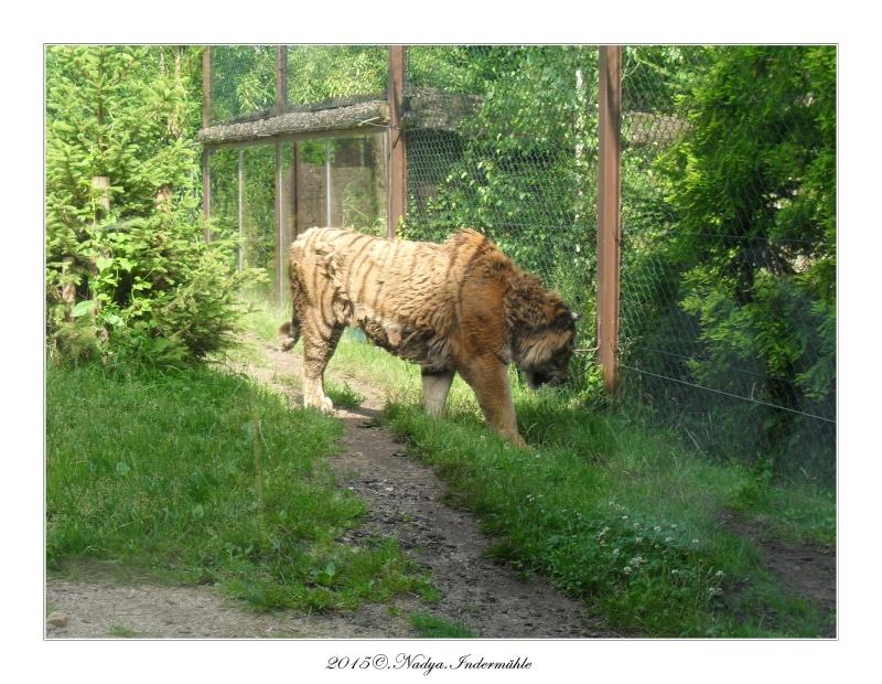 Amnéville, et son zoo Cadre361