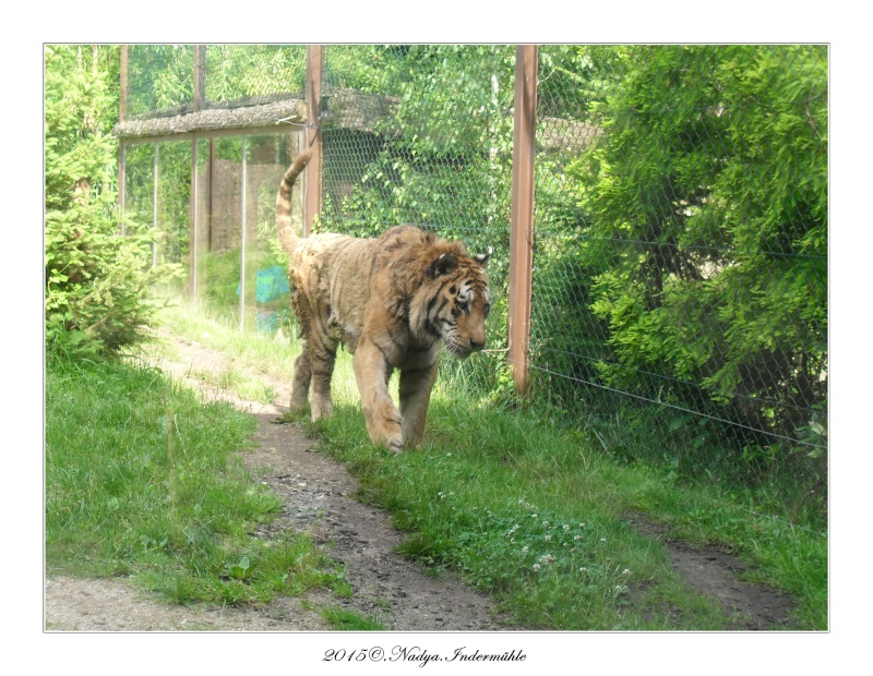 Amnéville, et son zoo Cadre362