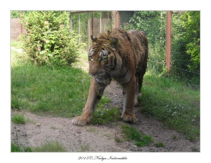 Amnéville, et son zoo Cadre363