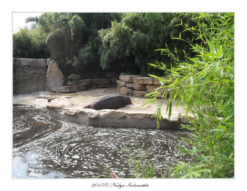 Amnéville, et son zoo Cadre364