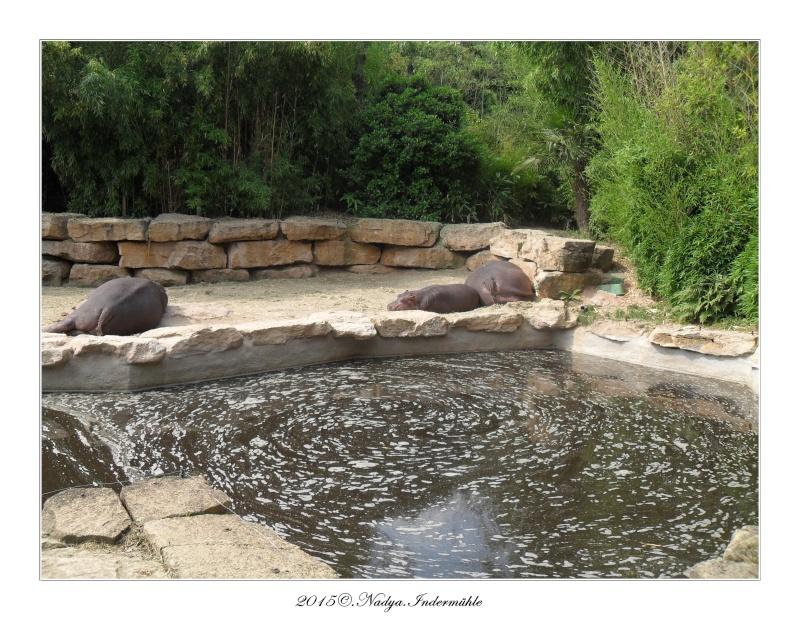 Amnéville, et son zoo Cadre366