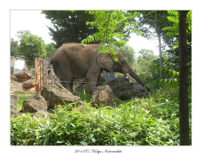 Amnéville, et son zoo Cadre368