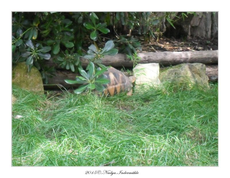 Amnéville, et son zoo Cadre369