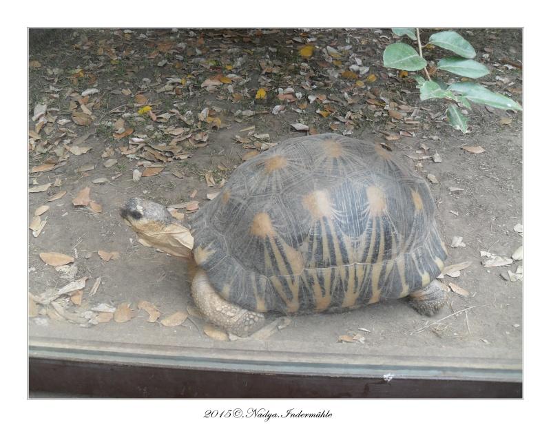 Amnéville, et son zoo Cadre370