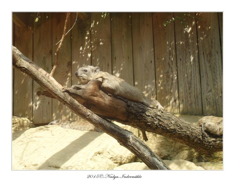 Amnéville, et son zoo Cadre642