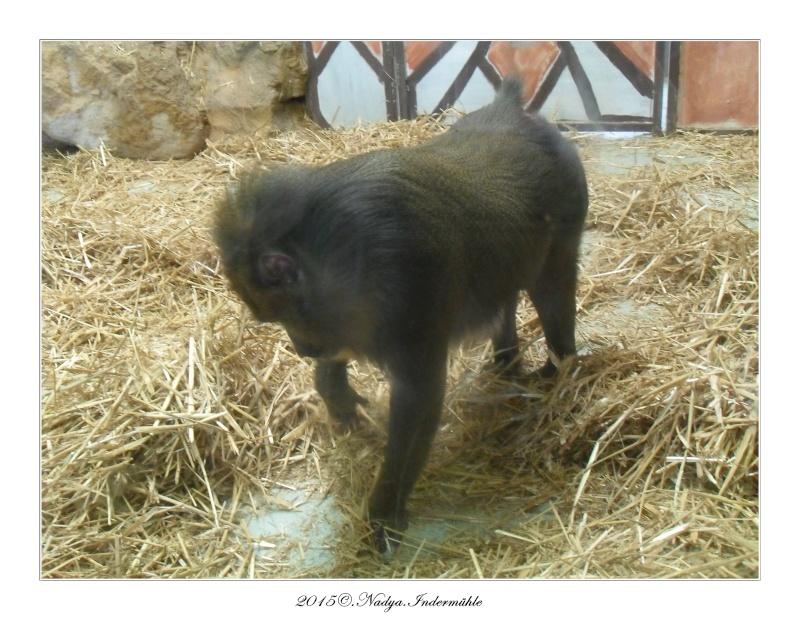 Amnéville, et son zoo Cadre645