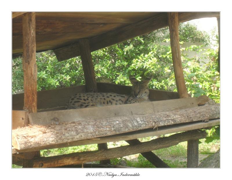 Amnéville, et son zoo Cadre646
