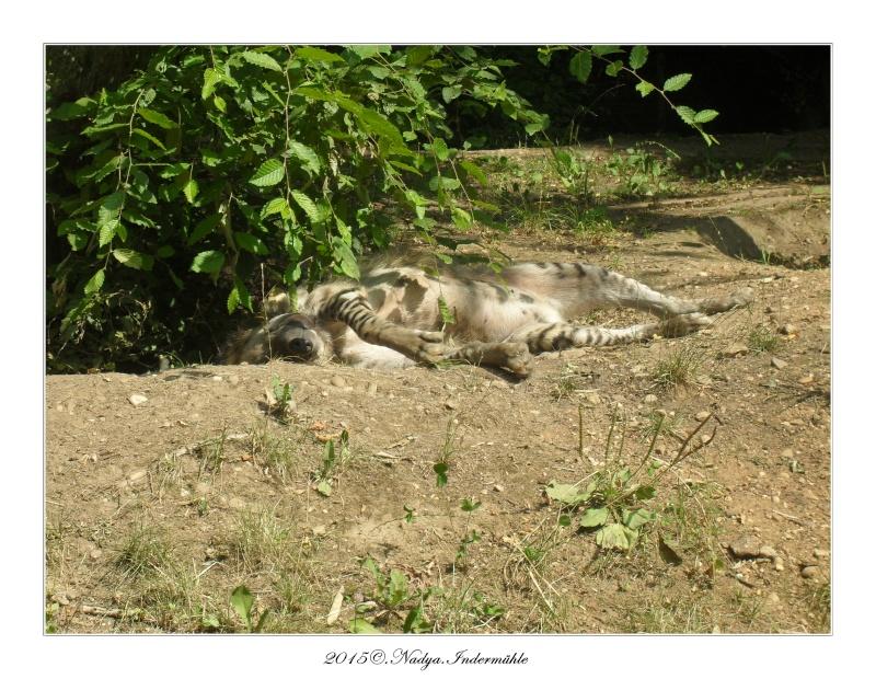 Amnéville, et son zoo Cadre647