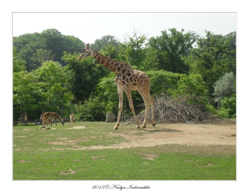 Amnéville, et son zoo Cadre648