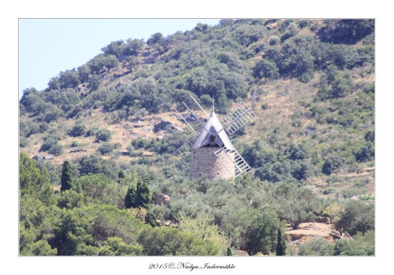 Collioure, petit coin de paradis - Page 3 Cadrer30