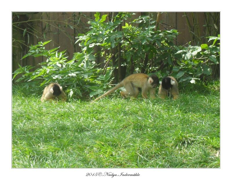 Amnéville, et son zoo Cadrer53