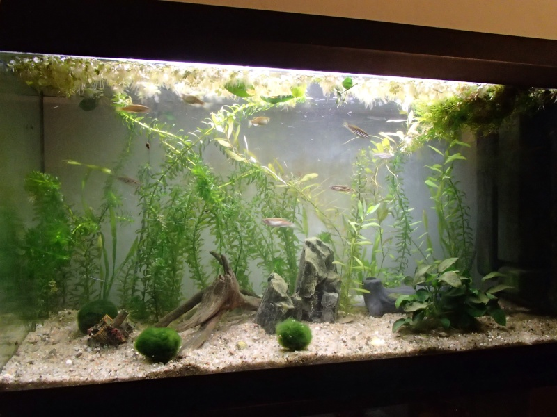 Démarrage aquarium 100L Pb200213