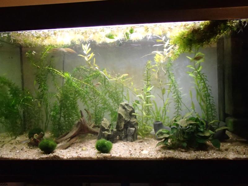 Démarrage aquarium 100L Pb200214