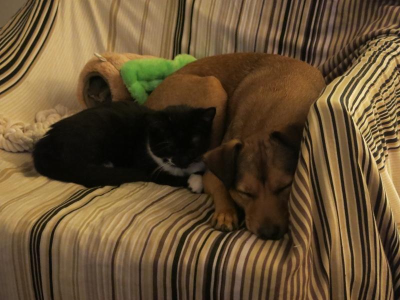 Cohabitation chien et chats - Page 11 Img_4110