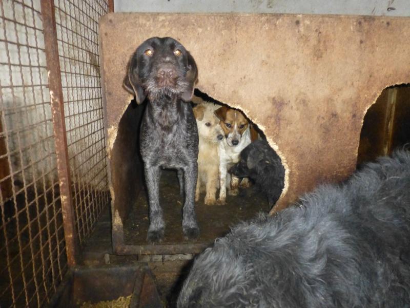 chien94 - CARAMELLE, F-X petite 10kg, née 2014 env (SERBIE/Pension GORDANA) PRETE A VOYAGER 12012210