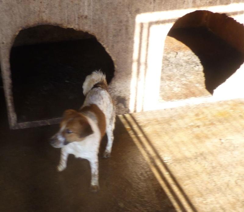 chien94 - CARAMELLE, F-X petite 10kg, née 2014 env (SERBIE/Pension GORDANA) PRETE A VOYAGER 94_b10