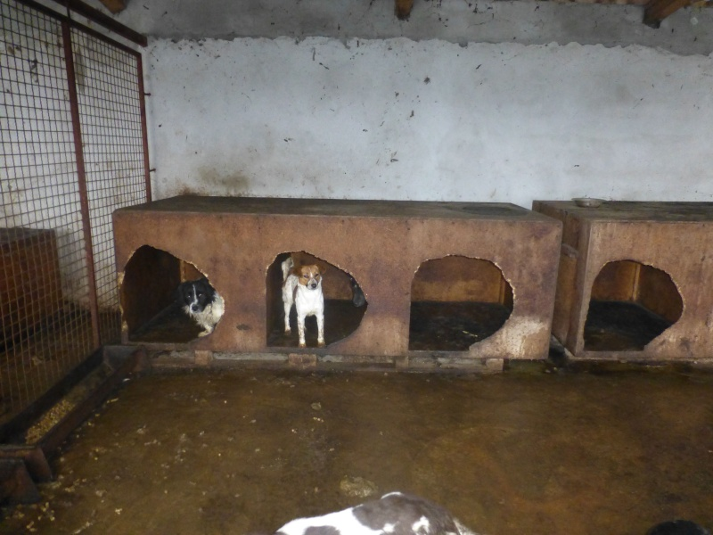 chien94 - CARAMELLE, F-X petite 10kg, née 2014 env (SERBIE/Pension GORDANA) PRETE A VOYAGER P1210911