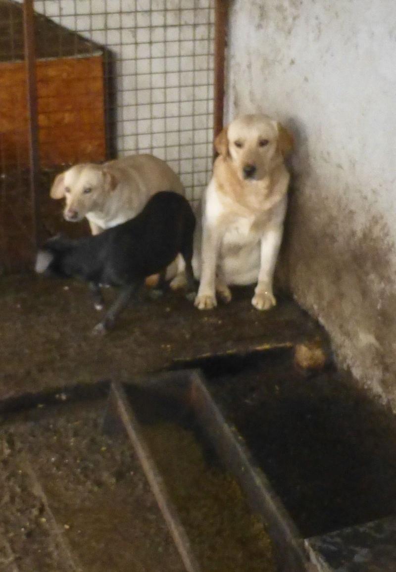 chien109 - CHIEN109, X TECKEL F, née ?, taille petite (Fourrière BACKA) - URGENT Teck10