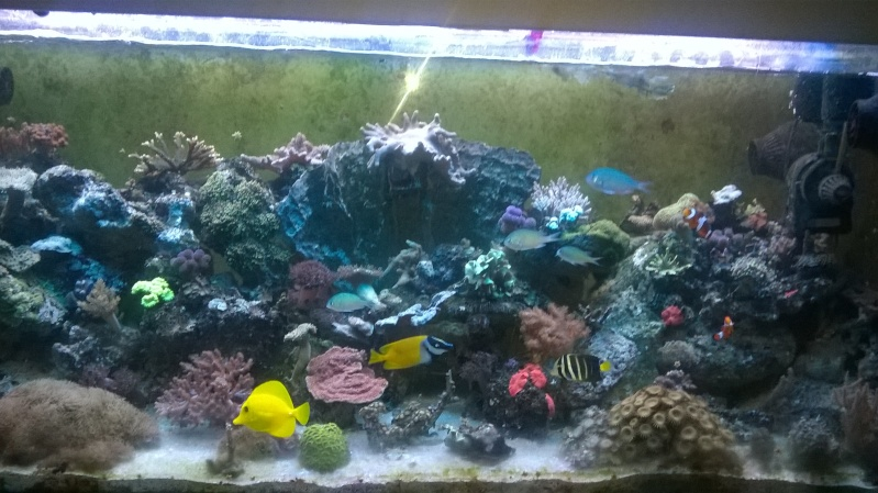 488 litres eau de mer - Page 4 Wp_20110