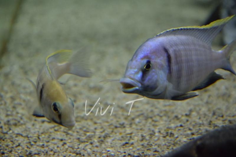 Mes photos plaisirs Image38