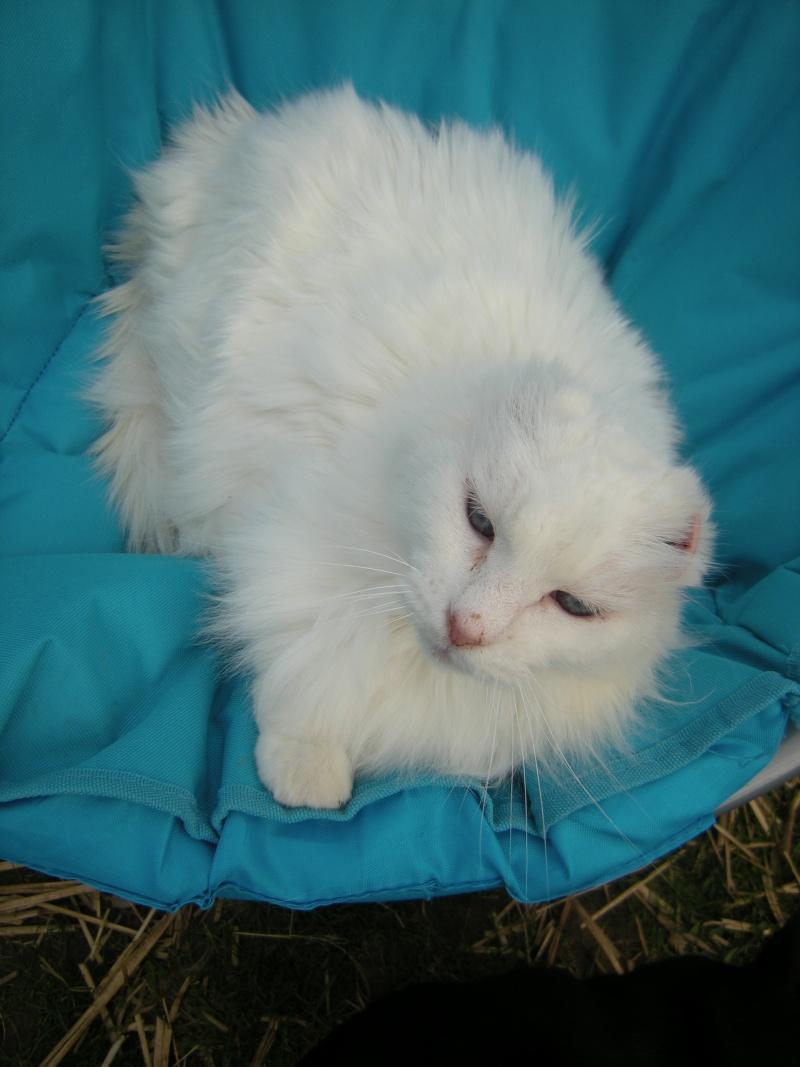 Hyperthyroidie chez un chat de presque 20 ans 02210