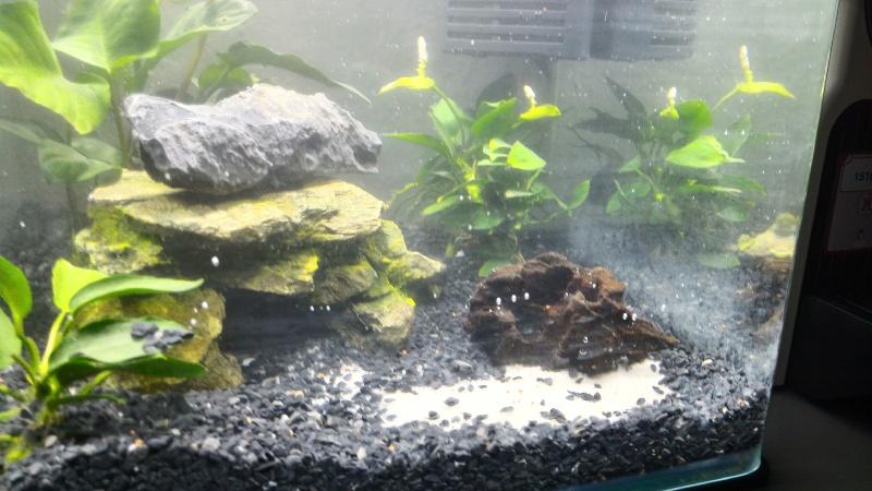 Aquarium 36L 2015-011