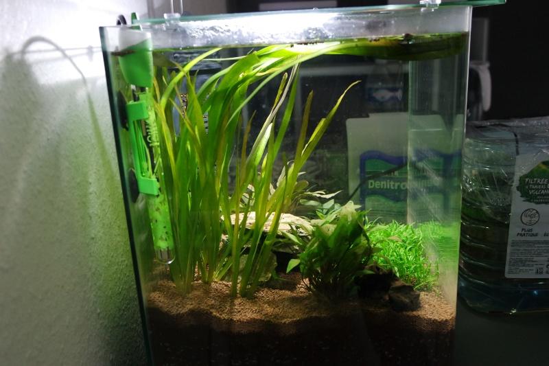 Aquarium 36L Sam_1818