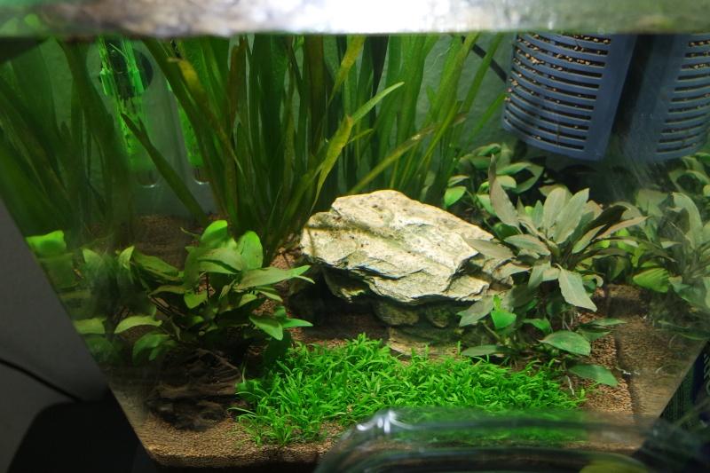 Aquarium 36L Sam_1910