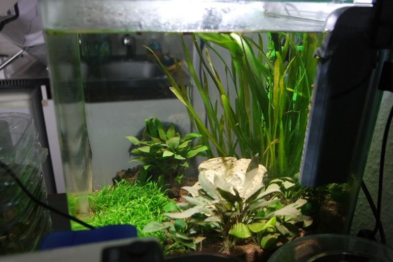 Aquarium 36L Sam_1911