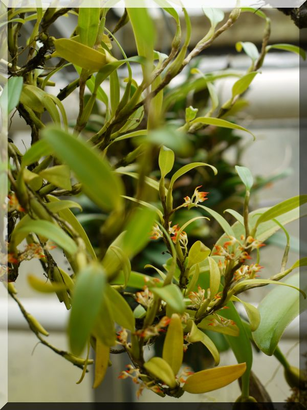 Orchideen 2 (fortlaufende Seiten 200 bis 300) - Seite 5 1_p10112