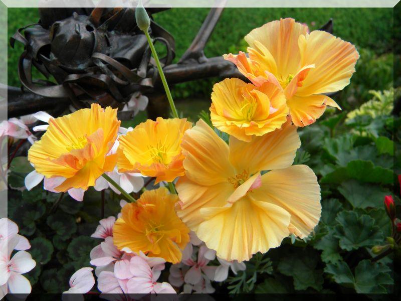 Begleitpflanzen der Kakteen in Haus und Garten - Seite 24 3_dscn10