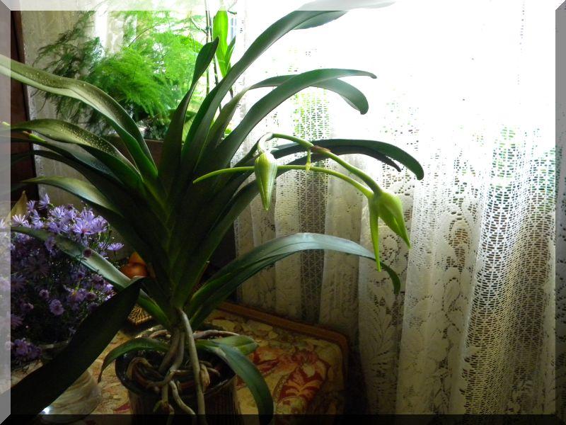 Orchideen 2 (fortlaufende Seiten 200 bis 300) - Seite 6 Dscn3910