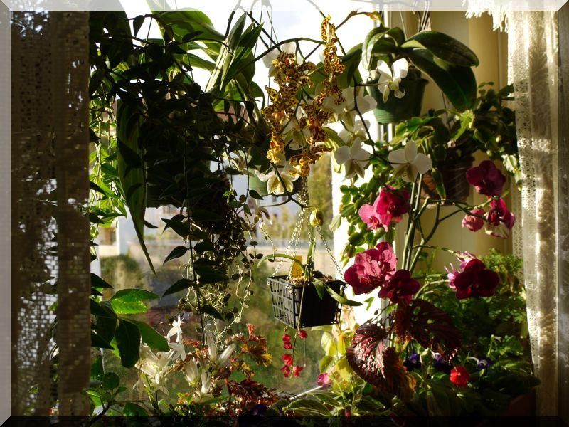 Orchideen 2 (fortlaufende Seiten 200 bis 300) P1040510
