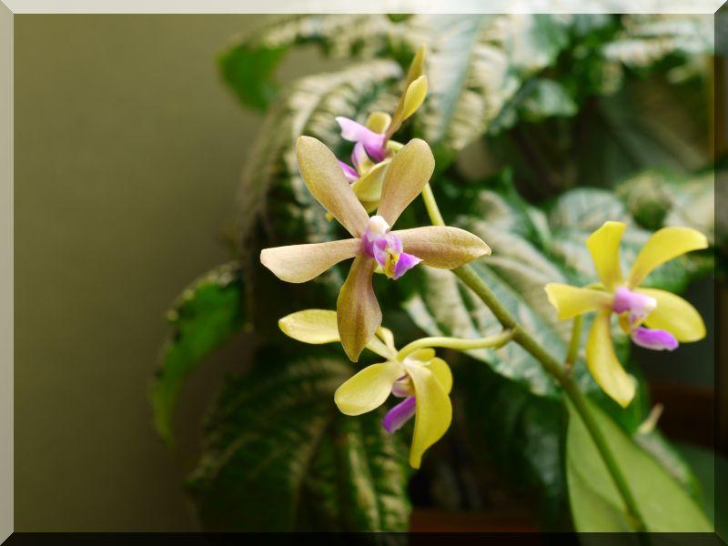 Orchideen 2 (fortlaufende Seiten 200 bis 300) P1050210