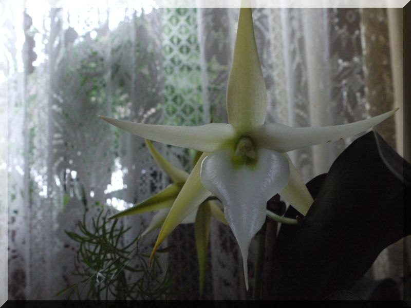 Orchideen 2 (fortlaufende Seiten 200 bis 300) - Seite 6 P1070011