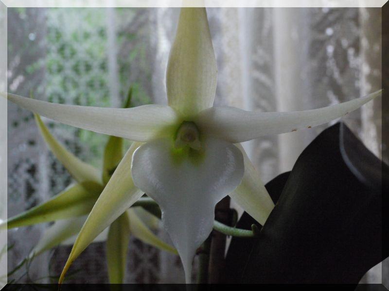 Orchideen 2 (fortlaufende Seiten 200 bis 300) - Seite 6 P1070012