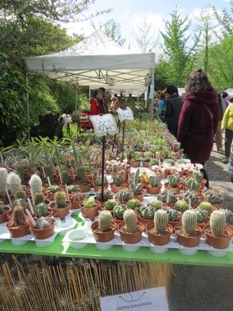 Foire des plantes d'Iturraran (Pays Basque Espagnol) Img_0318
